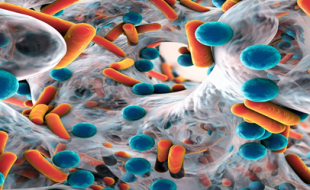 Bakteriyel Biyofilmler